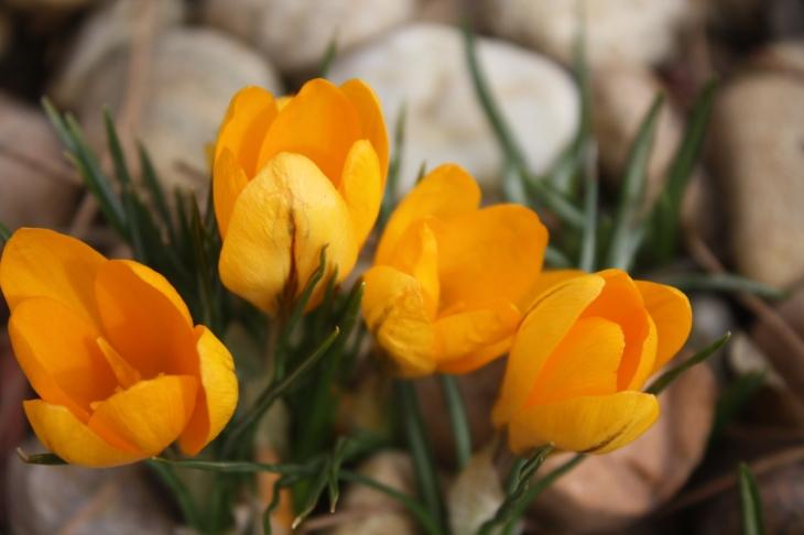 Spring, Anyone?