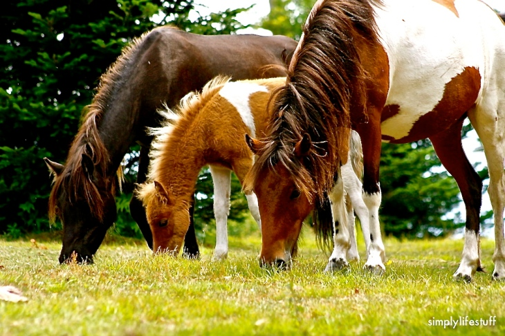 Beautiful ponies everywhere.  Though of you Hannah Malone and Cindy Barrineau Malone