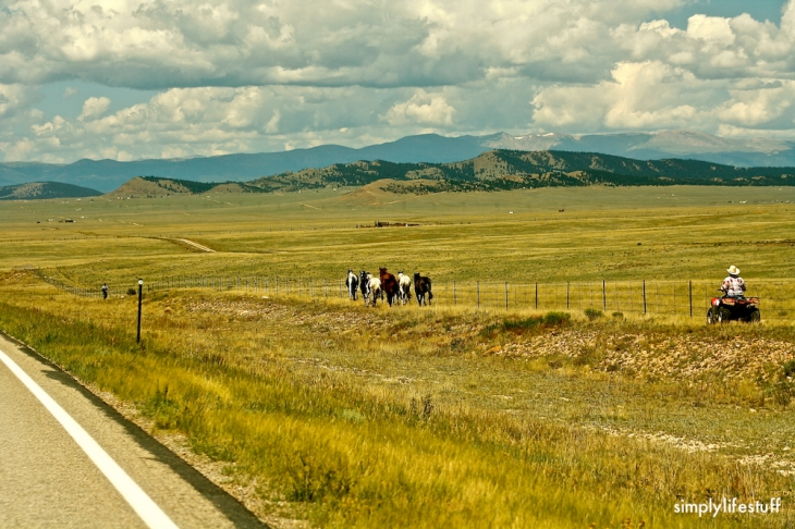 Rancher trying to herd horses that got loose.